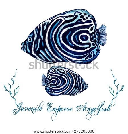 Watercolor Angelfish, isolated on white background. Tropical fish card, postcard & invitation. Elegant concept for Aquarium, Swimming Lessons, Diving courses & Eco Tourism. Element for your design. - stock vector