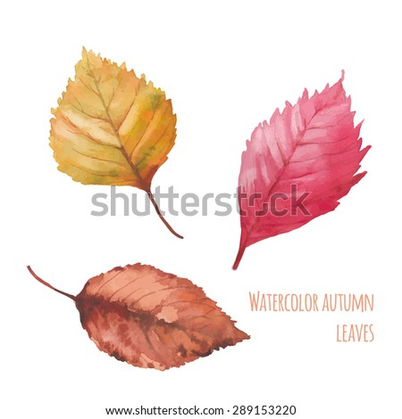 Watercolor autumn leaves set. Hand drawn red, brown and yellow tree leaves isolated on white background. Natural artistic clip art in vector - stock vector