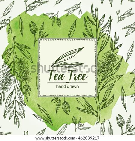Herbal harvest tea tree