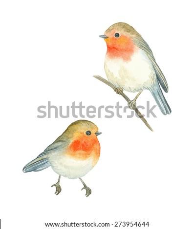 Watercolor birds Robin (Erithacus rubecula), vector illustration. - stock vector