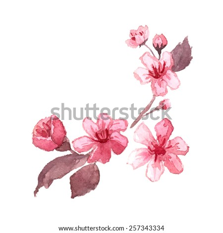 Watercolor blossom cherry tree branches. Hand drawn japanese flowers on white background. Vector illustration. - stock vector
