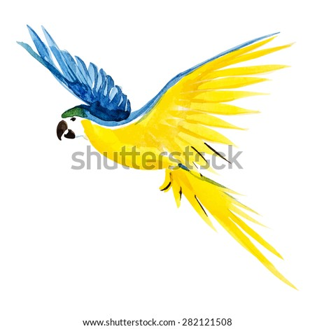 Watercolor blue yellow parrot, vector - stock vector