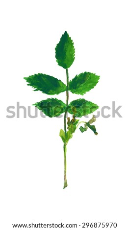 Watercolor branch with green leaves. Hand made easily editable vector illustration. - stock vector