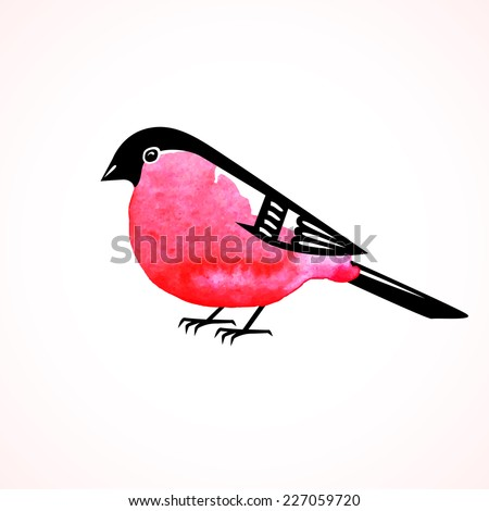 Watercolor bullfinch on white background. Vector illustration. - stock vector