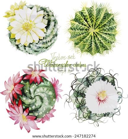 Watercolor cactus. Vector set - stock vector