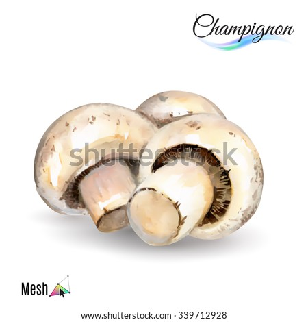 Watercolor champignon plant isolated in white background - stock vector