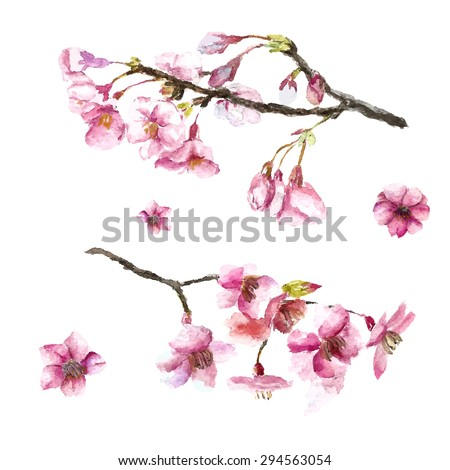 Watercolor cherry blossom. Hand draw cherry blossom sakura branch and flowers. Vector illustrations. - stock vector