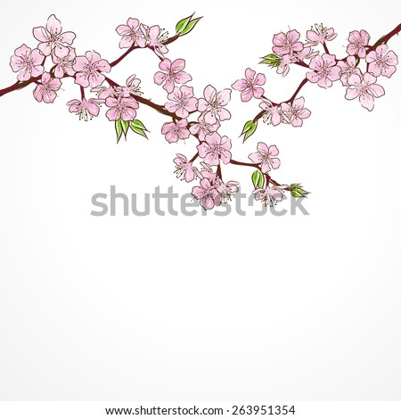 Watercolor cherry branch with flowers isolated on white background.Vector - stock vector
