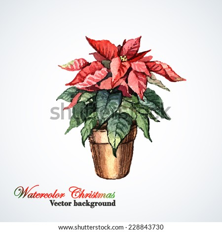 Watercolor Christmas flower Poinsettia. Vector watercolor illustration. Hand painting.  Illustration for greeting cards, invitations, and other printing projects. - stock vector
