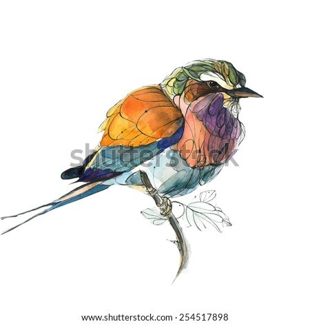 Watercolor colorful bird - stock vector