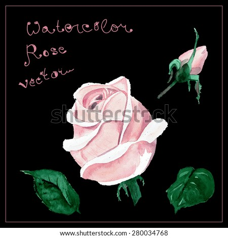 Watercolor colorful rose flower pattern set. Hand drawn plant aqua color wet template greeting card. Vector isolated watercolor painting. - stock vector