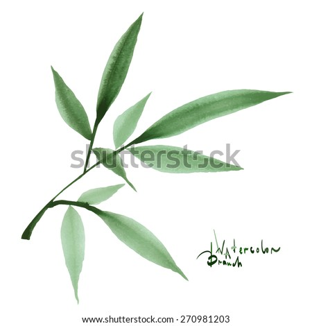 Watercolor decorative branch with leaves for your design. Isolated hand drawn design element on white background. Hand drawn watercolor painting.