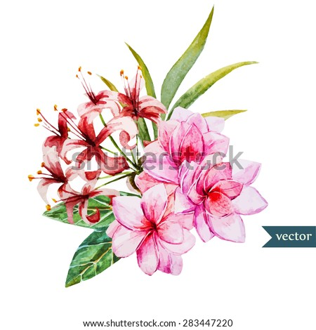 Watercolor Drawing Tropical Flower Plumeria Flowers Stock Vector ...