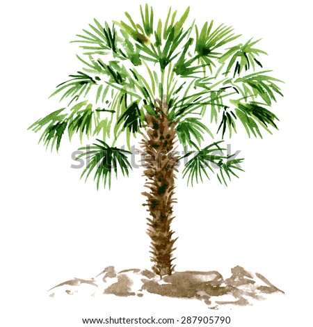 watercolor drawn palm tree, hand painting vector illustration - stock vector