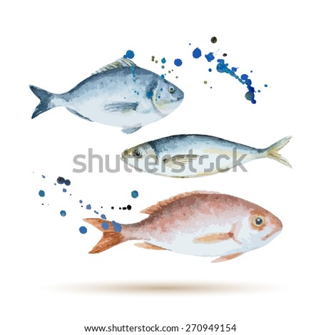 Watercolor fish. Fresh organic seafood. Vector illustration. - stock vector