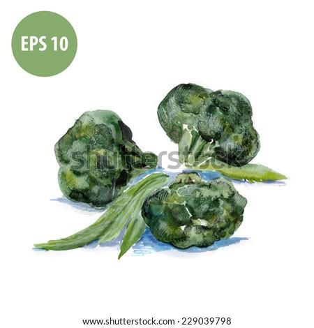 watercolor food, painting broccoli - stock vector
