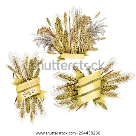 Watercolor golden ribbons with cereals on background. Wheat, millet, barley, rye and rice. Vector design collection - stock vector