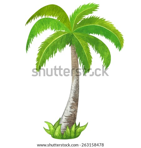 Watercolor green coconut palm tree closeup isolated on white background. Hand painting on paper