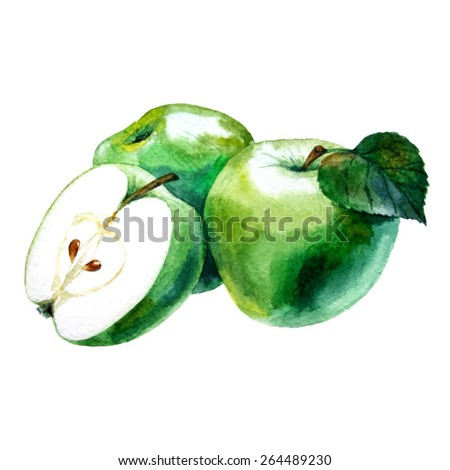 Watercolor hand drawn green apple. Vector fruit icon isolated on white background. - stock vector