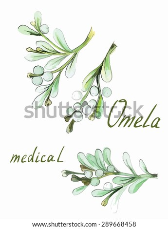 Watercolor hand drawn illustration. Vector Herbal set. Mistletoe (omela) medical - stock vector