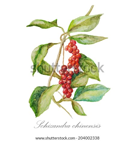 Watercolor hand drawn red berries. Vector image. Eps10
