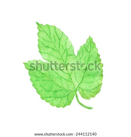 Watercolor hops leaf, aquarelle.  Vector illustration. Hand-drawn element. Beer brewing. Useful for invitations, scrapbooking, design. - stock vector