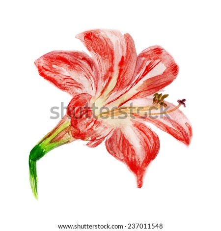Watercolor image of red flower isolated on white background. Vector eps8 - stock vector