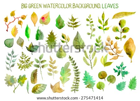 Watercolor leaves and grass collection for different design, Vector - stock vector