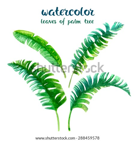 watercolor leaves of palm tree - stock vector