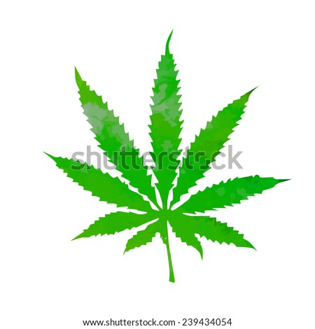 watercolor marijuana. Vector  - stock vector