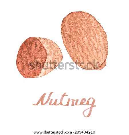 Watercolor nutmeg on the white background, aquarelle.  Vector illustration. Hand-drawn spice for mulled wine or cooking. Useful for invitations, scrapbooking, design. - stock vector