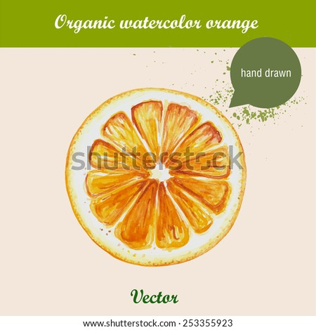 Watercolor orange. Hand drawn illustration on white background. Vector organic food.