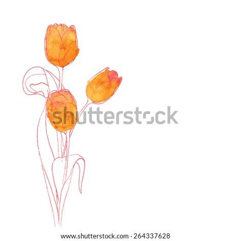 Watercolor orange tulips, vector - stock vector