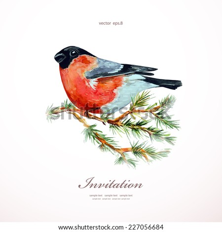 watercolor painting bullfinch on branch pine. vector illustration - stock vector