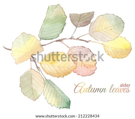 Watercolor painting of an autumn branch of alder tree vector