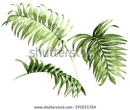 Watercolor palm leaves isolated on white. - stock vector