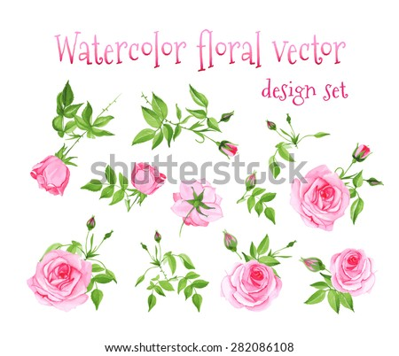 Watercolor pink roses vintage vector design set. All elements are isolated and editable.  - stock vector