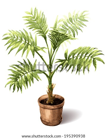 Watercolor pot plant  palm isolated on white. - stock vector