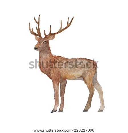 Watercolor realistic deer. Hand drawn zoo illustration in vector