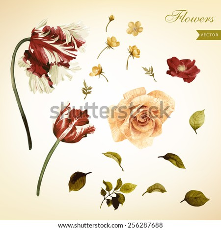 Watercolor red flowers of a dogrose and tulips.  - stock vector