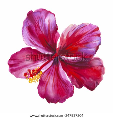 Watercolor red hibiscus. Hand drawn illustration. Vector option. - stock vector