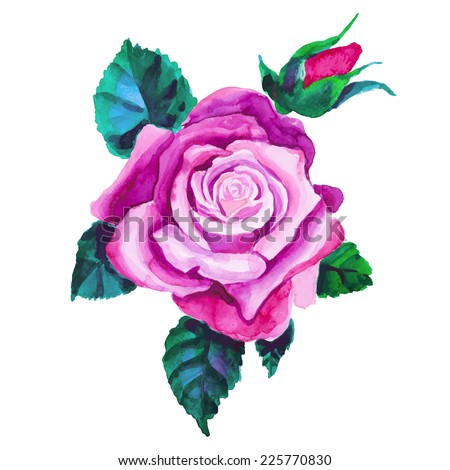 Watercolor rose flower. Hand drawn vintage vector illustration.  - stock vector