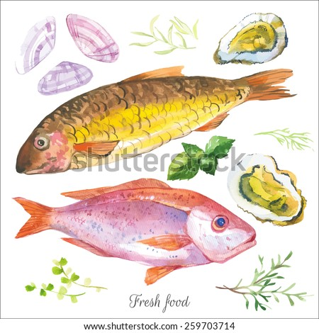 Watercolor set with fish seafood, clams and spices hand-drawn on a white background. Red mullet & oysters with basil & and other herbs. Simple painting sketch in vector format. - stock vector