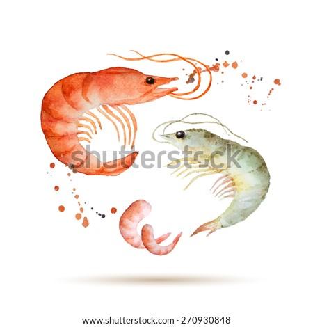 Watercolor shrimp. Fresh organic seafood. Vector illustration. - stock vector