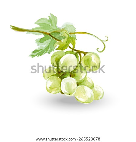 Watercolor Sketch bunches of grapes. Vector illustration. - stock vector