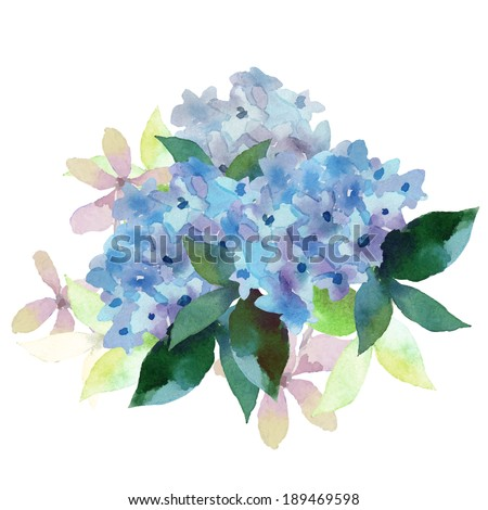 Watercolor style vector illustration of Hydrangea. Vector blue summer flowers isolated on a white background. - stock vector