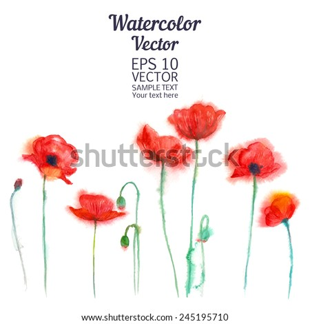 Watercolor-style vector illustration of Poppies - stock vector