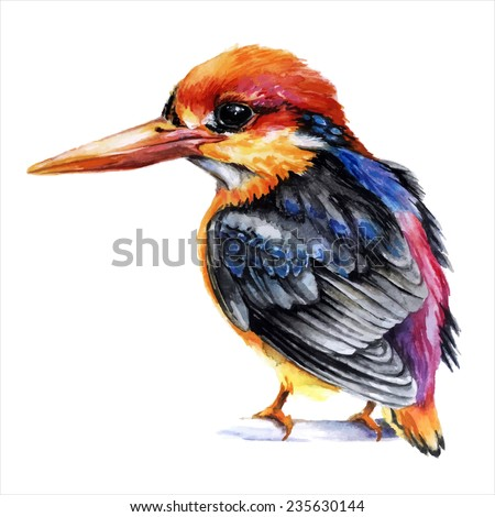 Watercolor style vector illustration of small kingfisher bird - stock vector