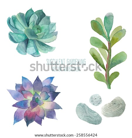 Watercolor succulent set. Isolated objects: stones, succulents, plant. Hand painted vintage garden illustration. Vector floral elements. - stock vector