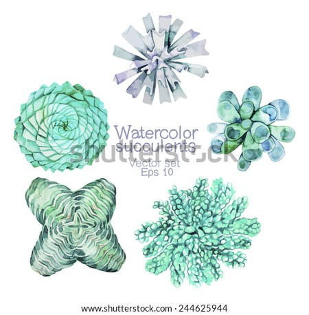 Watercolor succulents. Vector set - stock vector